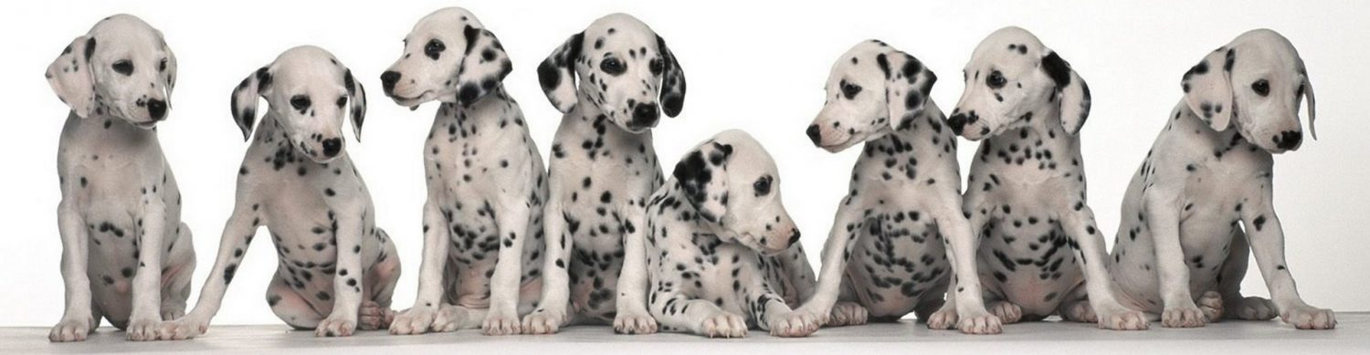 cropped-Animals_Dogs_Puppies_spotted_dogs_030135_.jpg